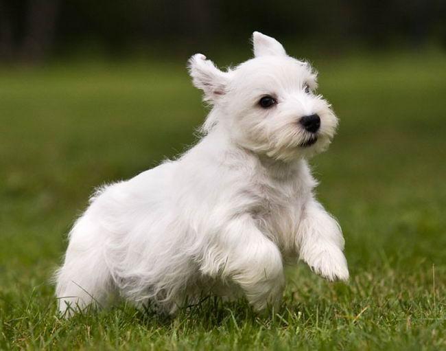 породы собак терьер фото